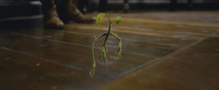 Le Botruc Picket dans Les Animaux Fantastiques : Les Crimes de Grindelwald